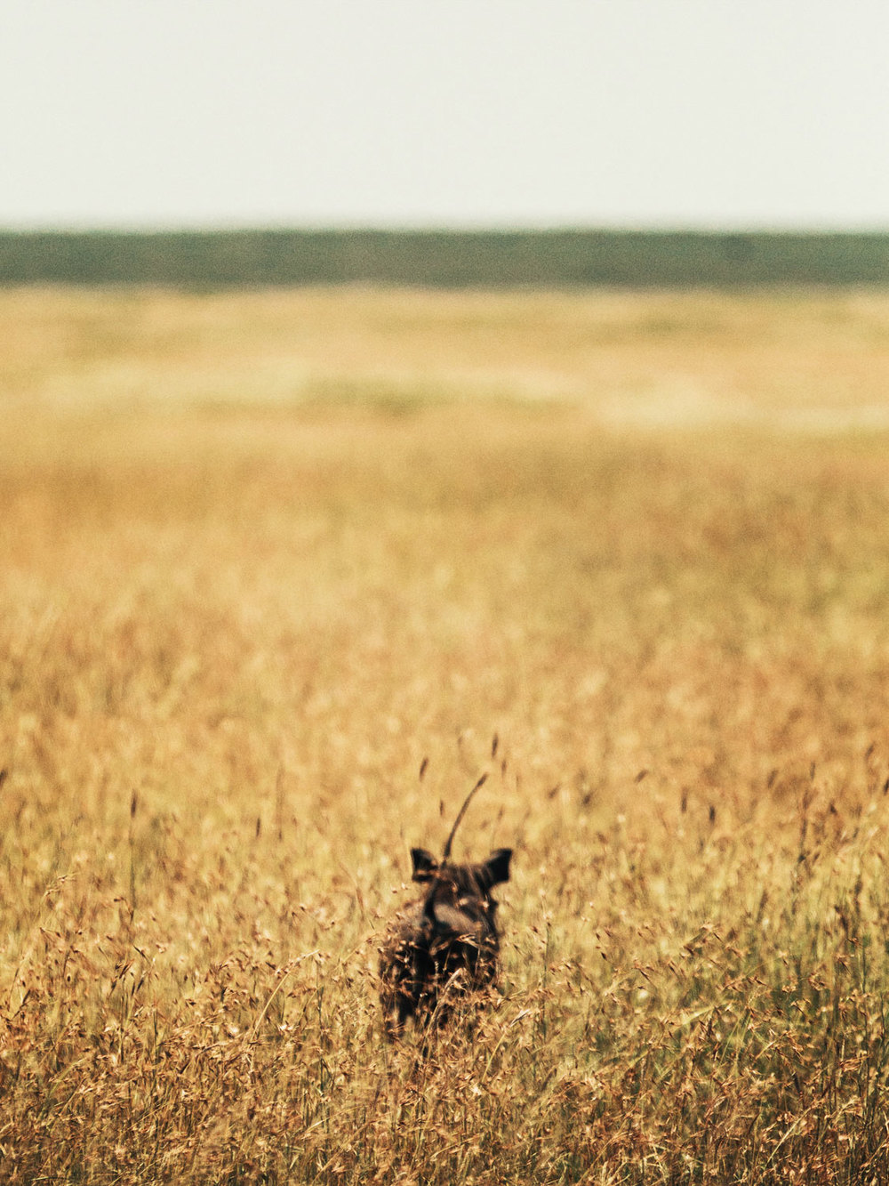 CallieGiovanna_Africa_Tanzania_Serengeti_20150101_08222.jpg