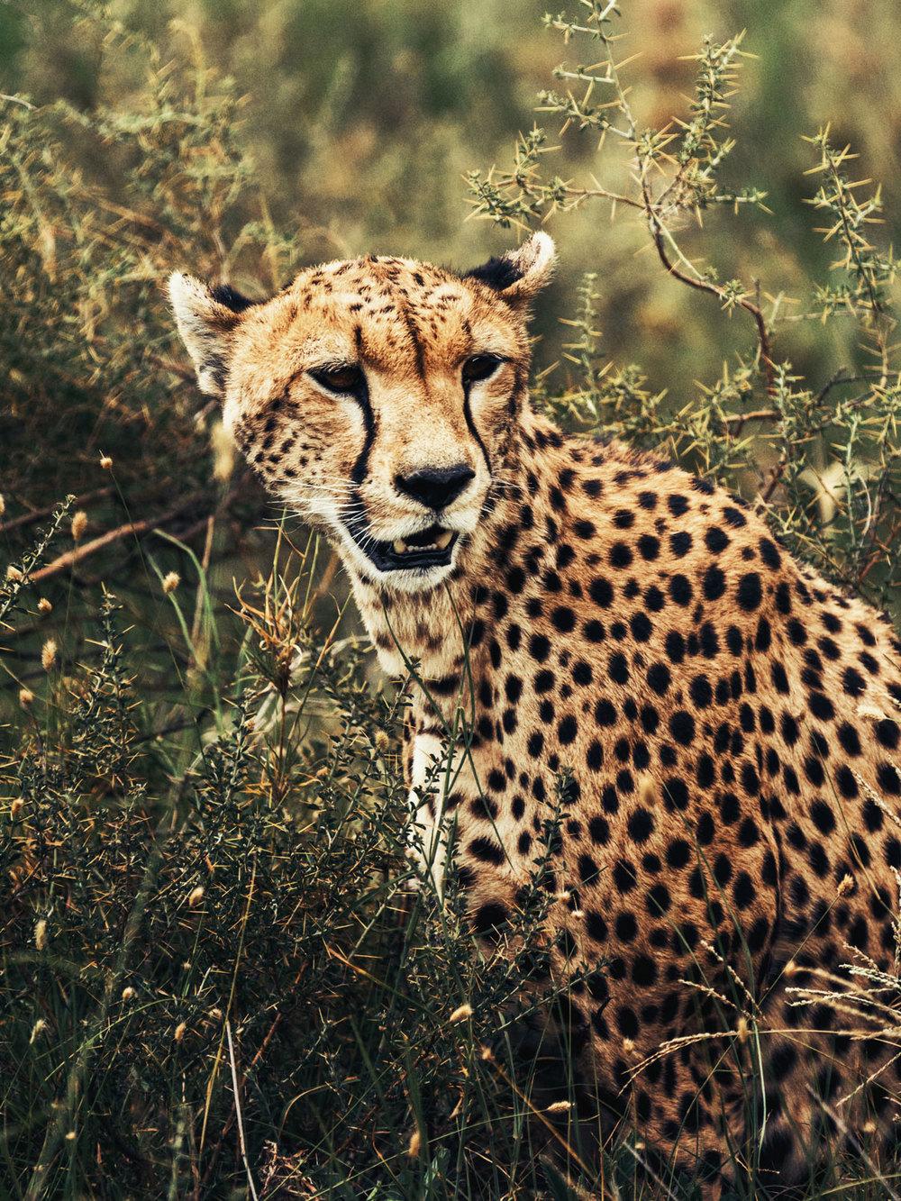 CallieGiovanna_Africa_Tanzania_Serengeti_20150101_08304.jpg