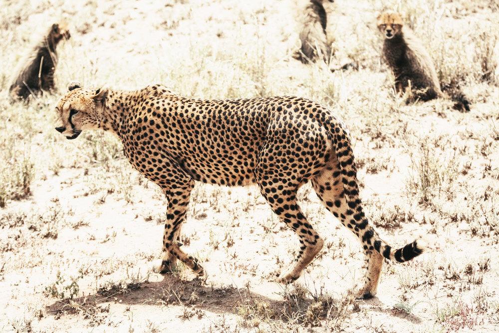 CallieGiovanna_Africa_Tanzania_Serengeti_20150101_08315.jpg