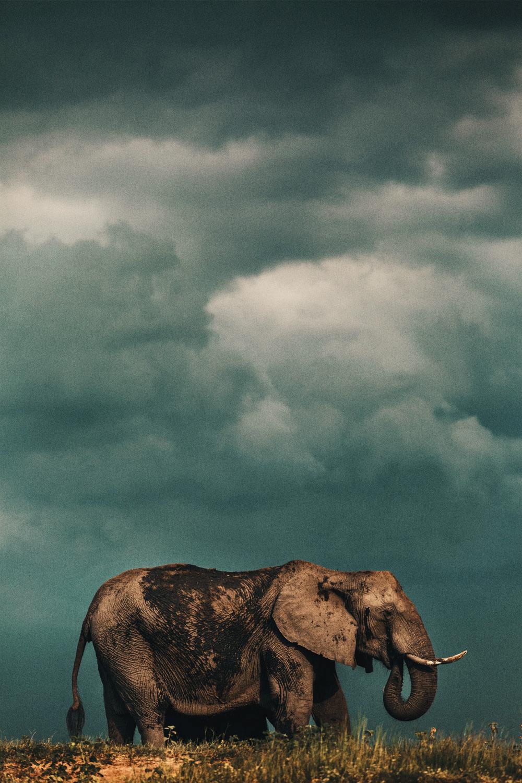 CallieGiovanna_Africa_Botswana_ChobeRiver_20150101_04150.jpg