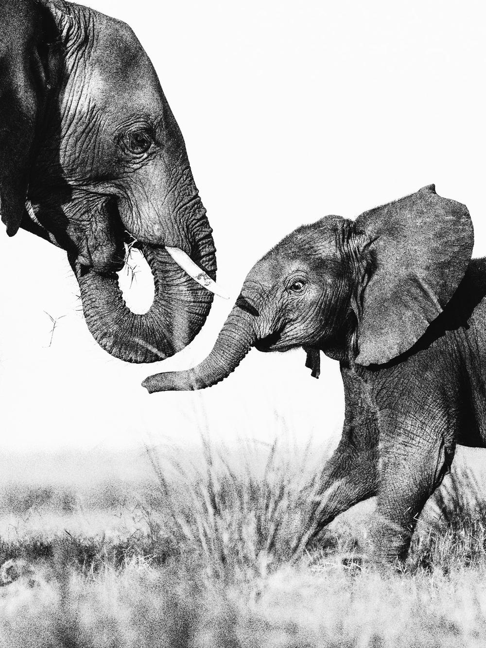 CallieGiovanna_Africa_Botswana_ChobeRiver_20150101_04295.jpg