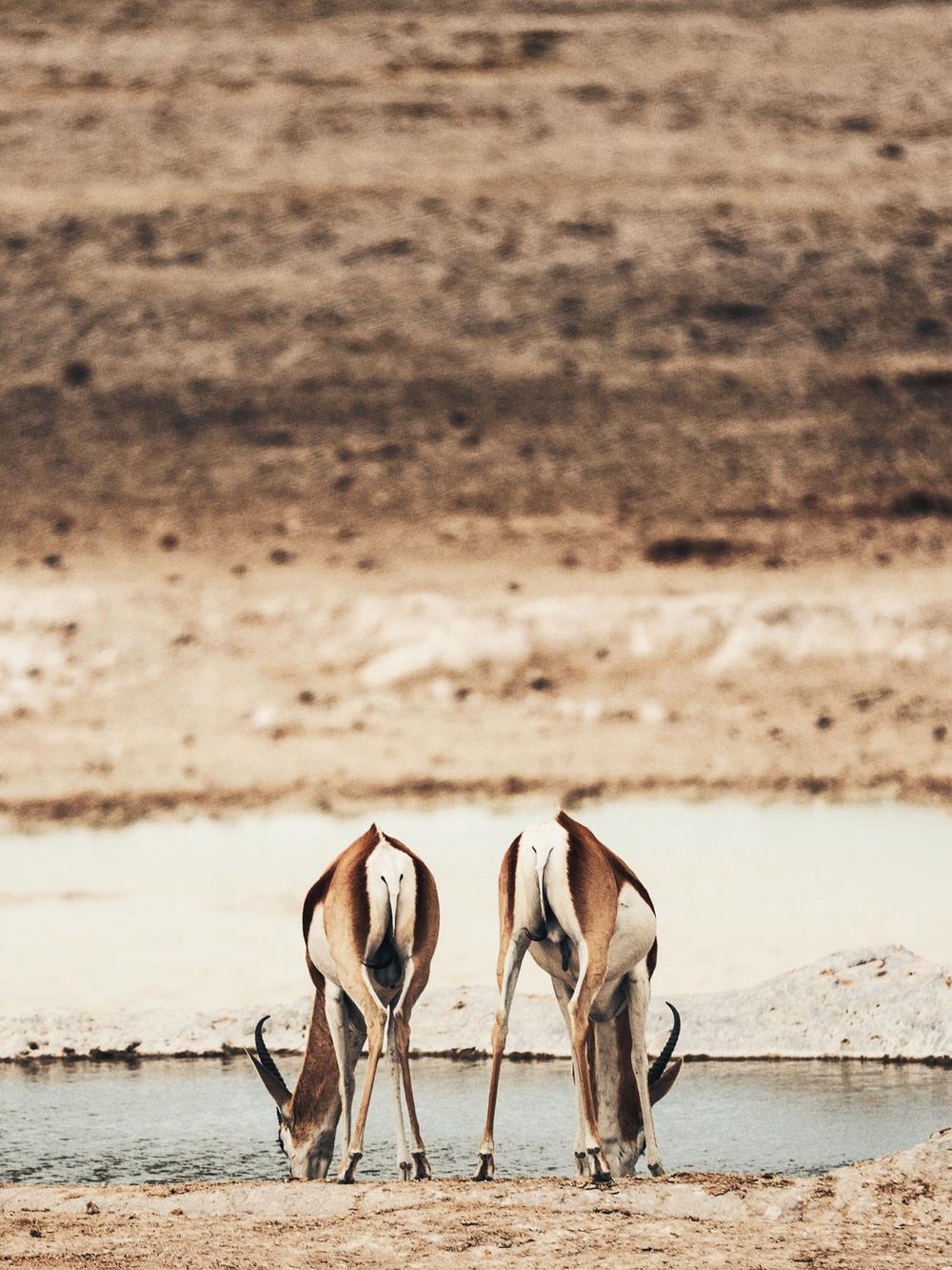 CallieGiovanna_Africa_Namibia_EtoshaNationalPark_20150101_01690.jpg