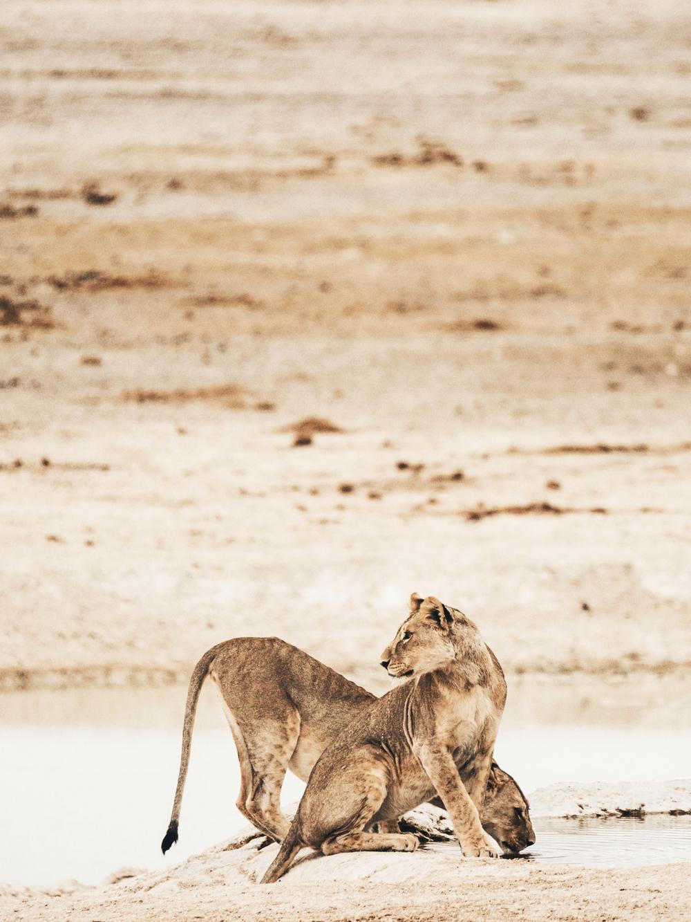 CallieGiovanna_Africa_Namibia_EtoshaNationalPark_20150101_01741.jpg