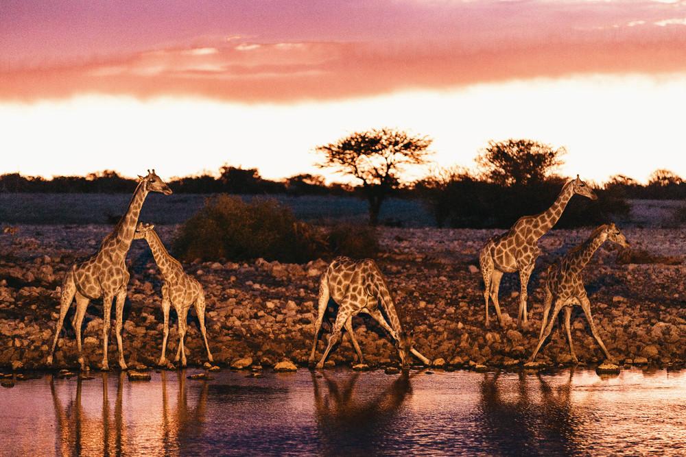 CallieGiovanna_Africa_Namibia_EtoshaNationalPark_20150101_01879.jpg