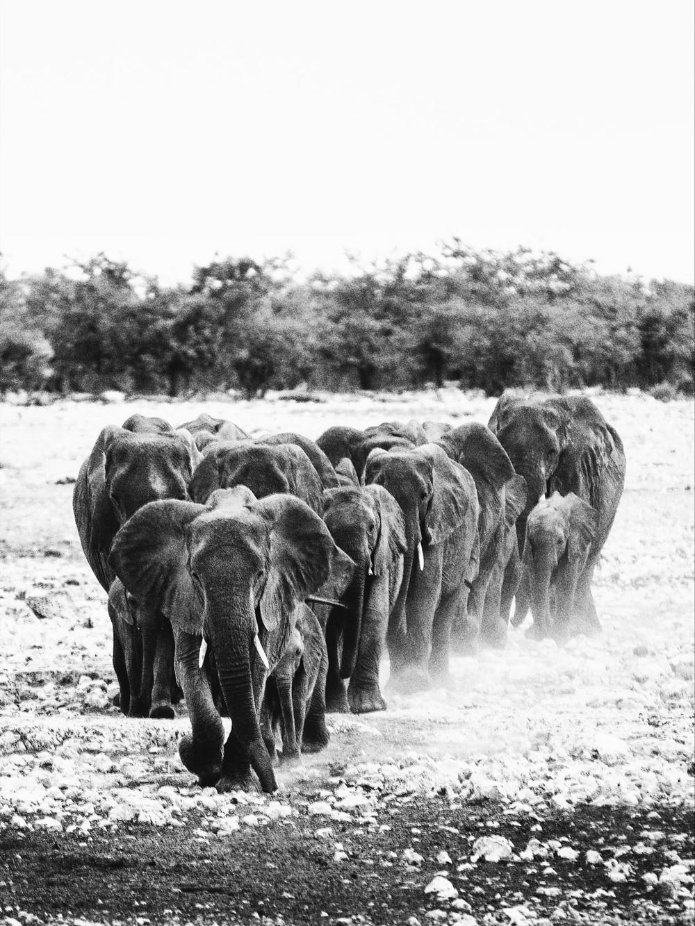 CallieGiovanna_Africa_Namibia_EtoshaNationalPark_20150101_02623.jpg