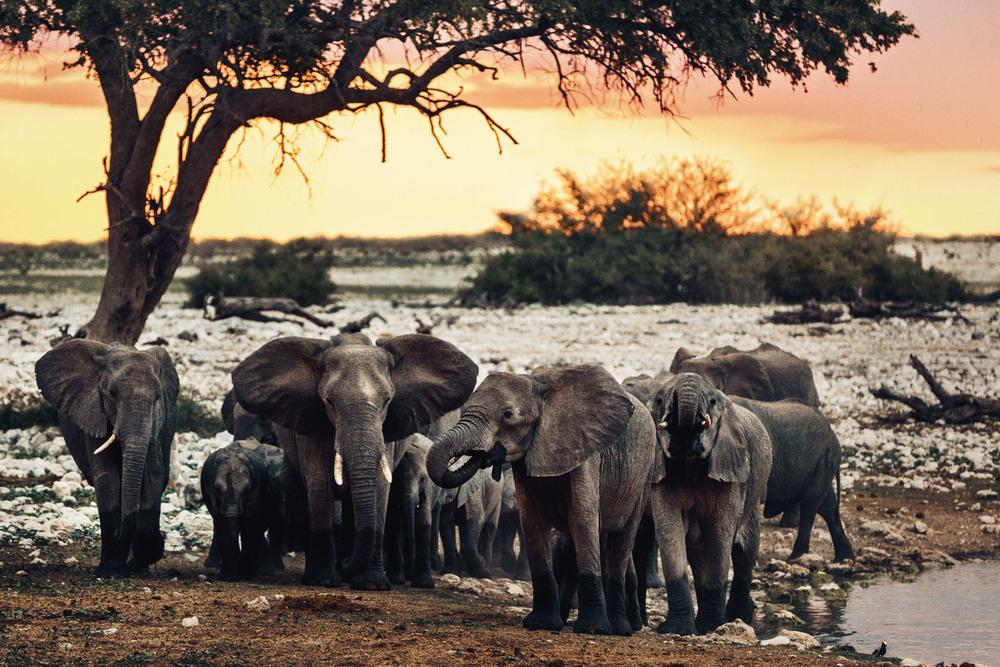 CallieGiovanna_Africa_Namibia_EtoshaNationalPark_20150101_02748.jpg