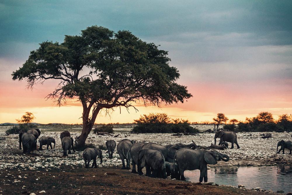 CallieGiovanna_Africa_Namibia_EtoshaNationalPark_20150101_02766.jpg