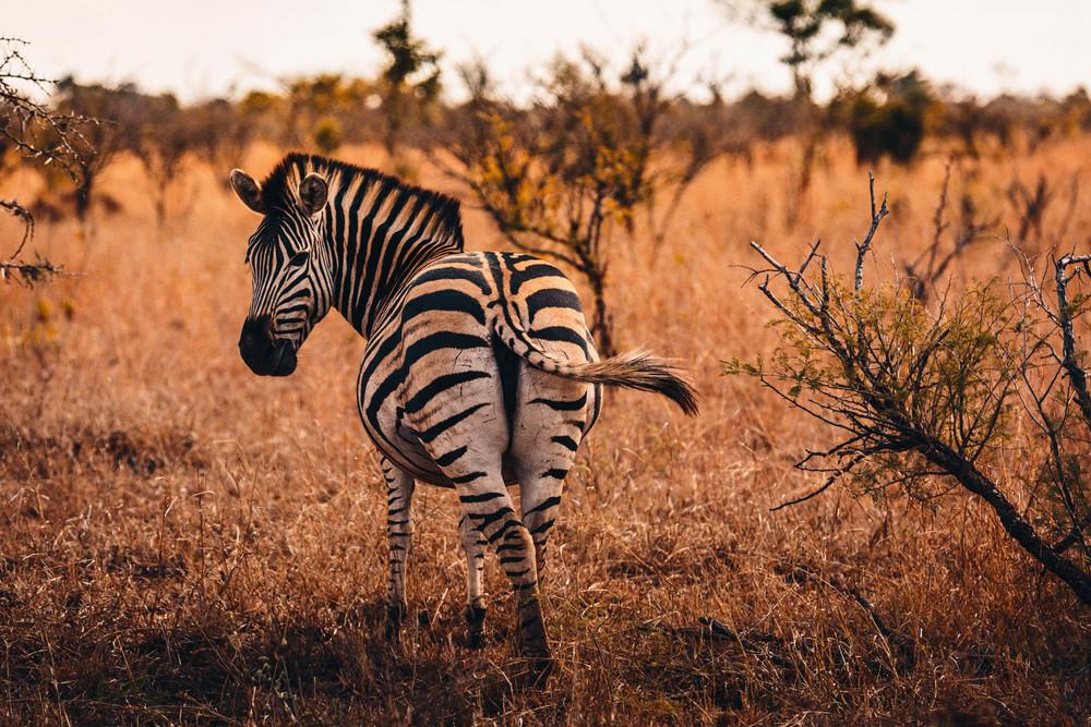 CallieGiovanna_Africa_SouthAfrica_KrugerNationalPark_20150701_4290.jpg
