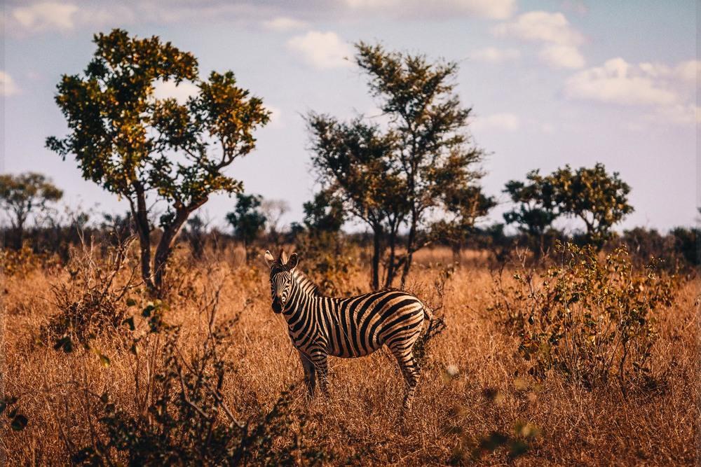 CallieGiovanna_Africa_SouthAfrica_KrugerNationalPark_20150701_4282.jpg