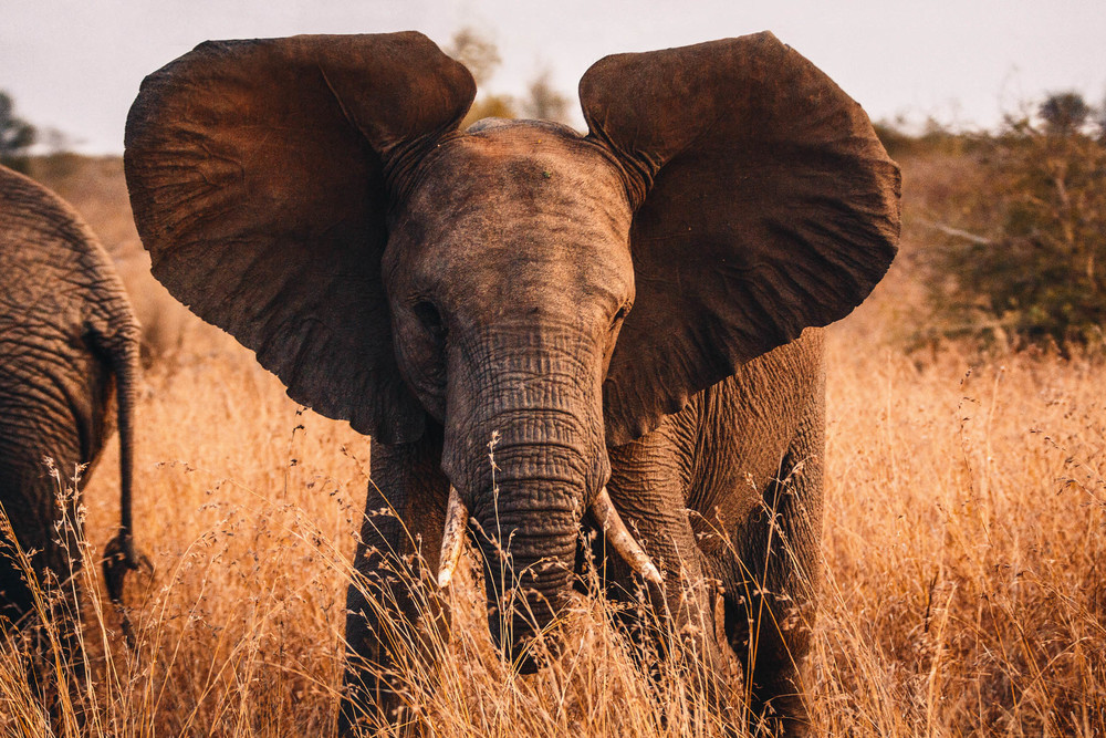 CallieGiovanna_Africa_SouthAfrica_KrugerNationalPark_20150701_4625.jpg