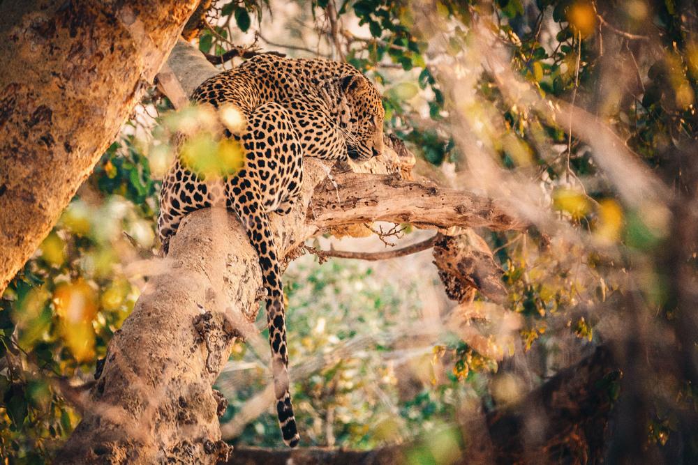 CallieGiovanna_Africa_SouthAfrica_KrugerNationalPark_20150701_4810.jpg