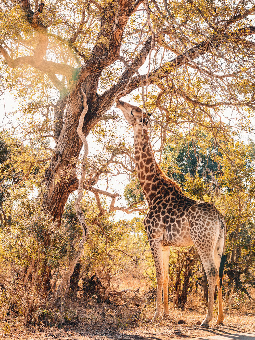 CallieGiovanna_Africa_SouthAfrica_KrugerNationalPark_20150701_5504.jpg