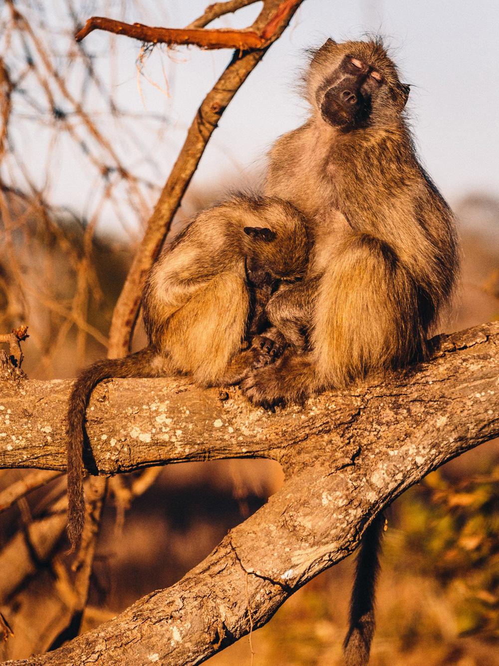 CallieGiovanna_Africa_SouthAfrica_KrugerNationalPark_20150701_5682.jpg