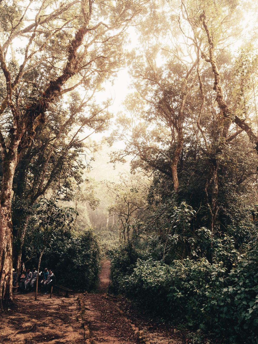 CallieGiovanna_Africa_Uganda_BwindiImpenetrableForest_20150101_09214.jpg