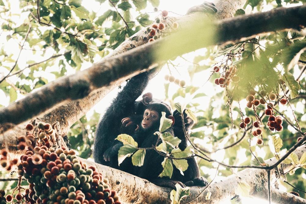 CallieGiovanna_Africa_Uganda_KalinzuForestReserve_20150101_08960.jpg