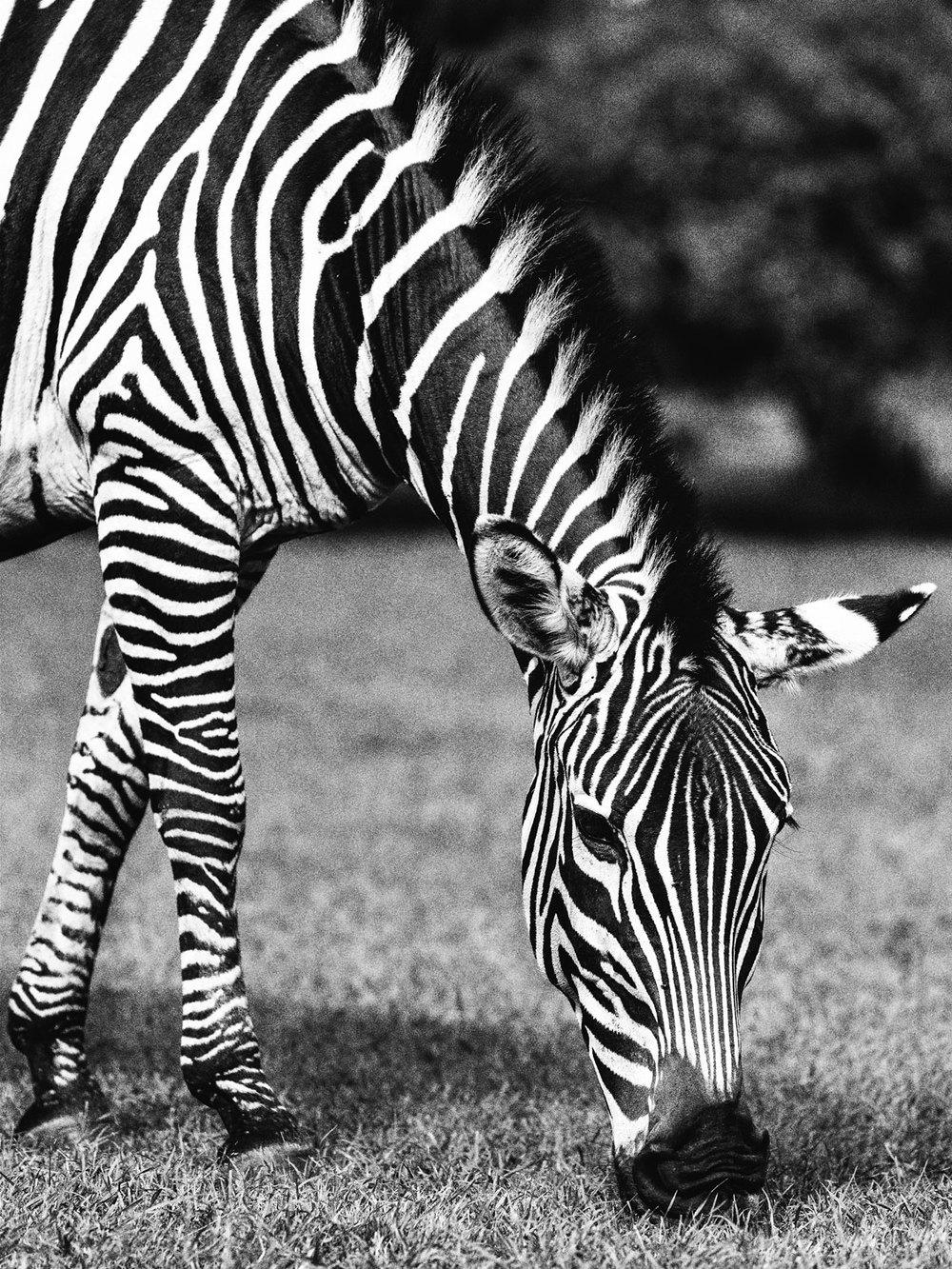 CallieGiovanna_Africa_Zambia_Eureka_20150101_05498.jpg