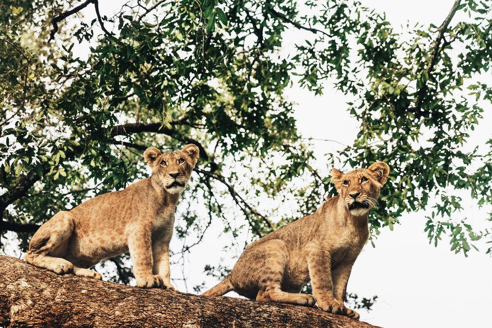 CallieGiovanna_Africa_Zambia_Livingstone_20150101_05189.jpg
