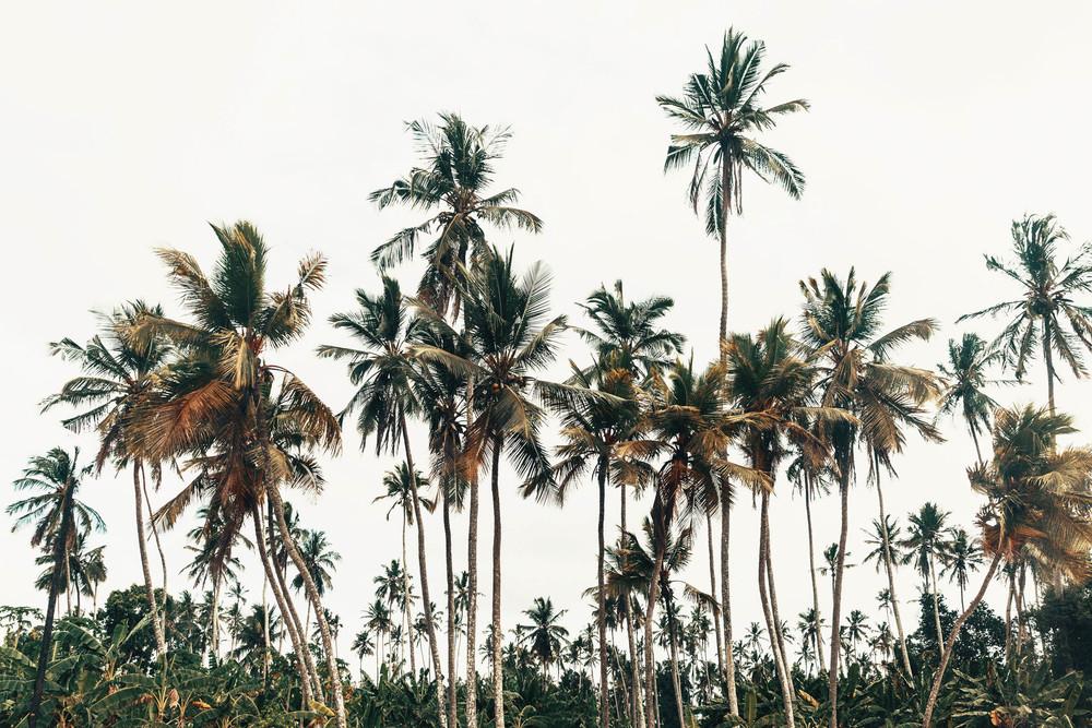 CallieGiovanna_Africa_Zanzibar_20150101_06785.jpg