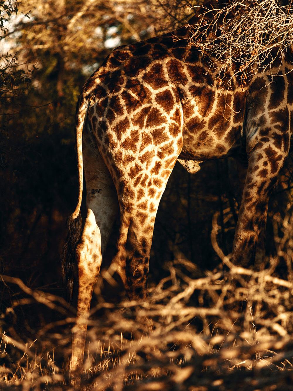 CallieGiovanna_Africa_SouthAfrica_KrugerNationalPark_20150701_3664.jpg