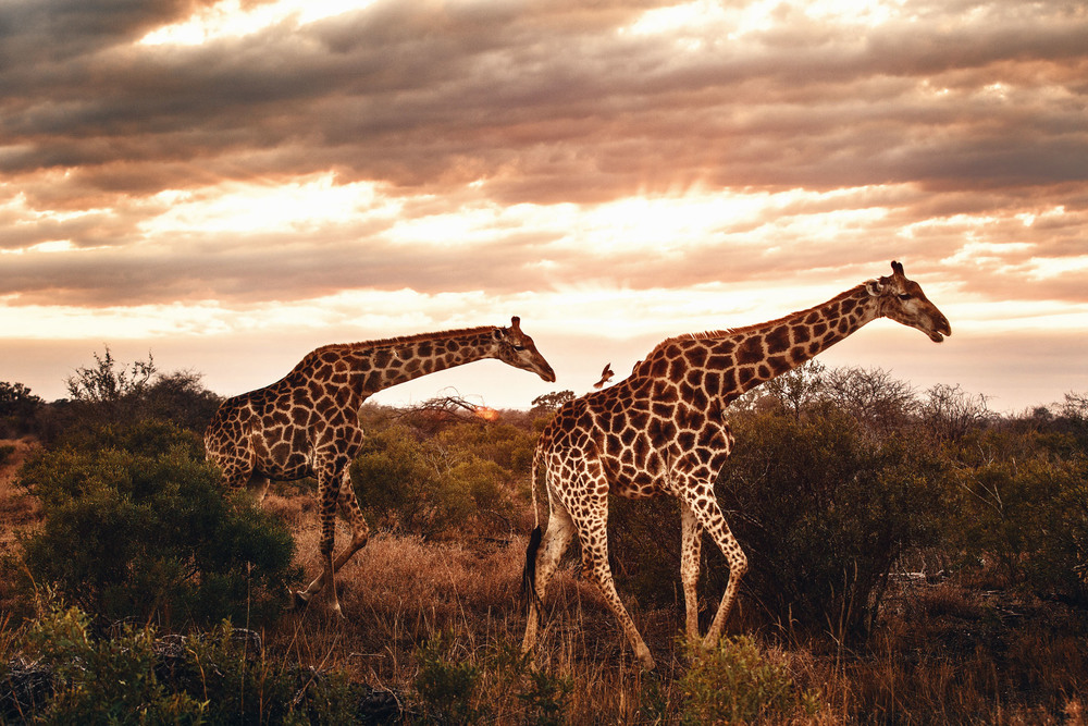 CallieGiovanna_Africa_SouthAfrica_KrugerNationalPark_20150701_5137.jpg