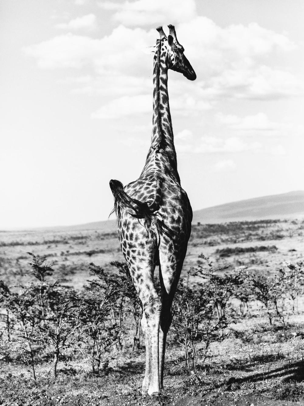CallieGiovanna_Africa_Tanzania_Serengeti_20150101_08403.jpg