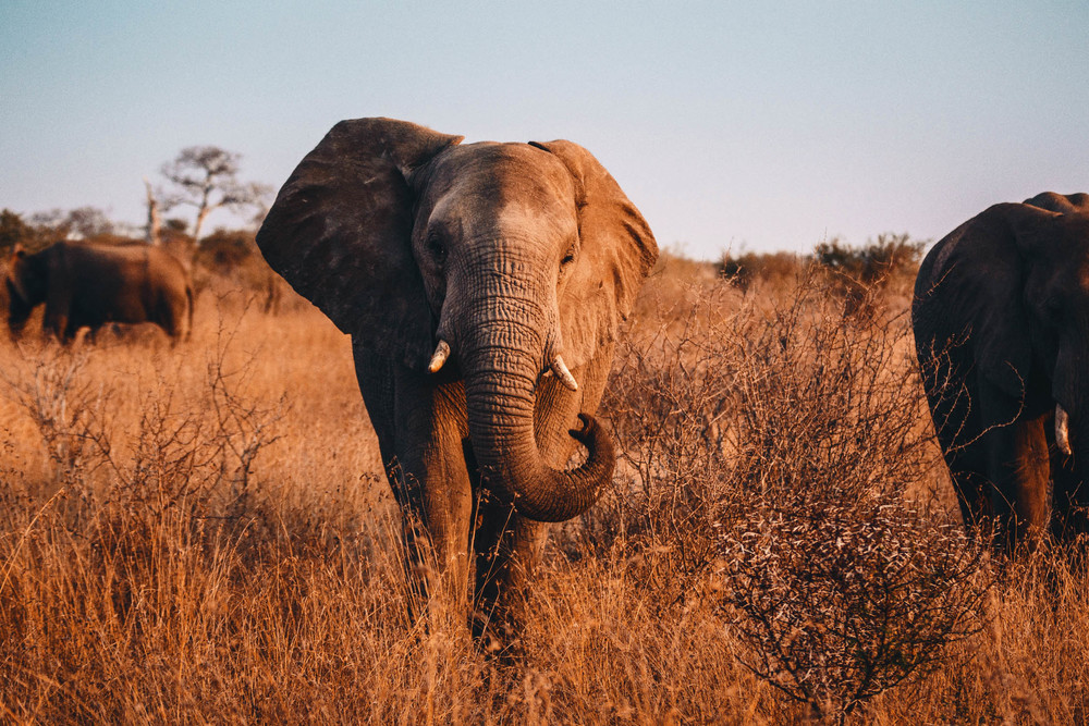 CallieGiovanna_Africa_SouthAfrica_KrugerNationalPark_20150701_4604.jpg