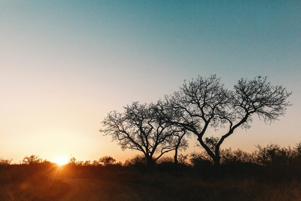 CallieGiovanna_Africa_SouthAfrica_KrugerNationalPark_20150701_5637.jpg