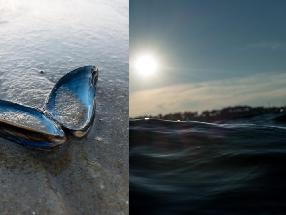 Mussel (2).jpg
