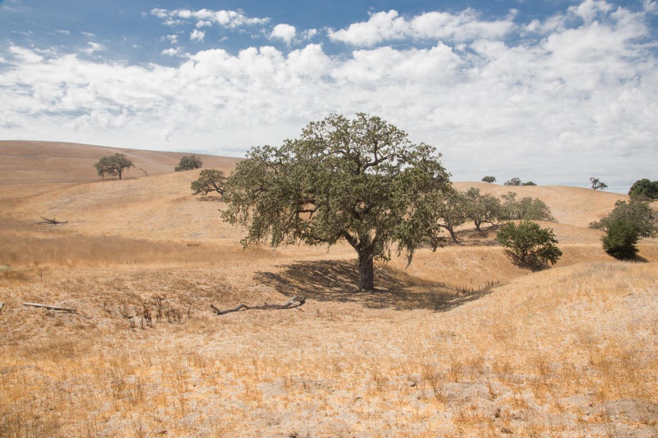 Los Olivos, CA 2014