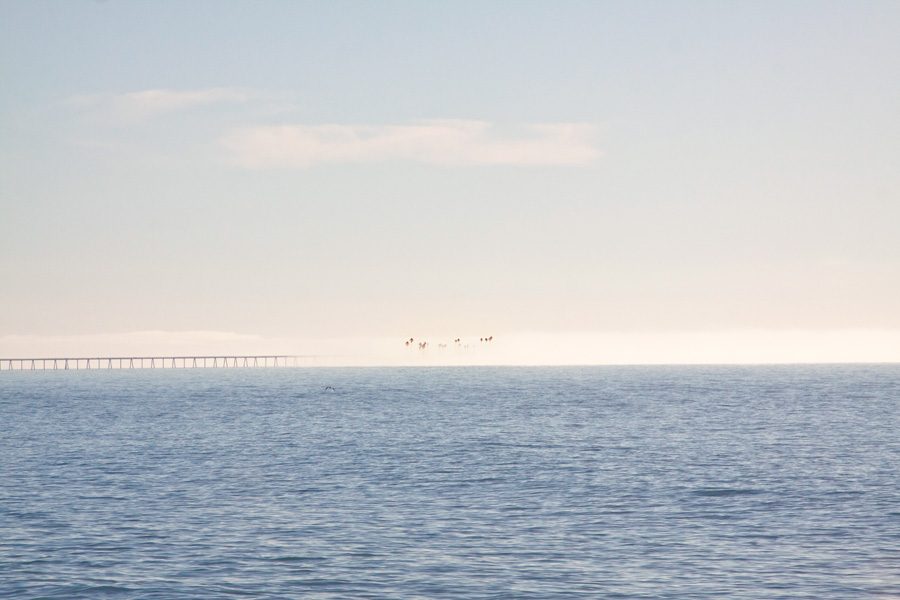 Richfield Pier and Rincon Island in fog -  MAP -  WIKI
