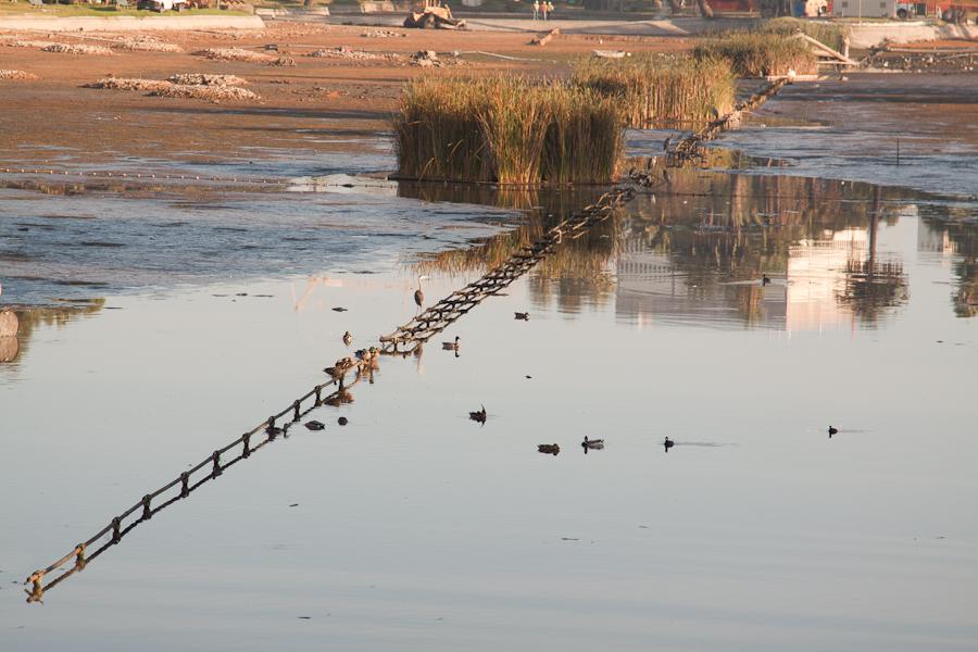 Echo Park Lake, Birds