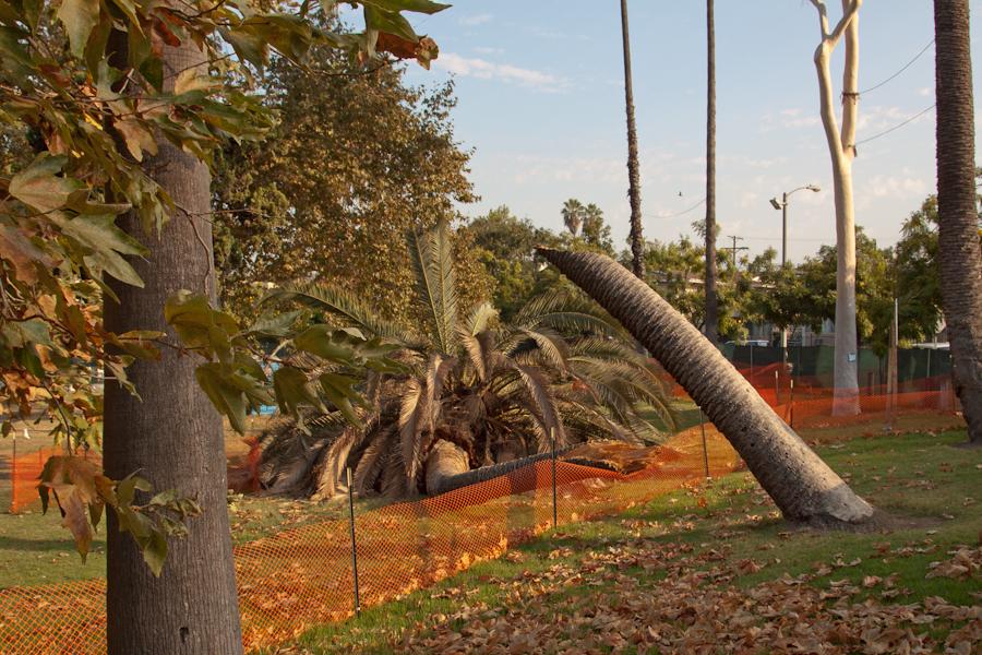 Echo Park Lake, Broken Tree