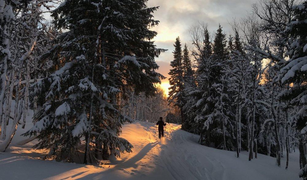För vad kan vara bättre än att...skida i ospårad snö mot skogsbrynet; bort i gryningen?