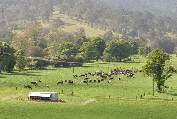 Cattleandeggs.jpg