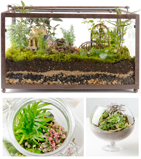 terrarium-collage-open.jpg
