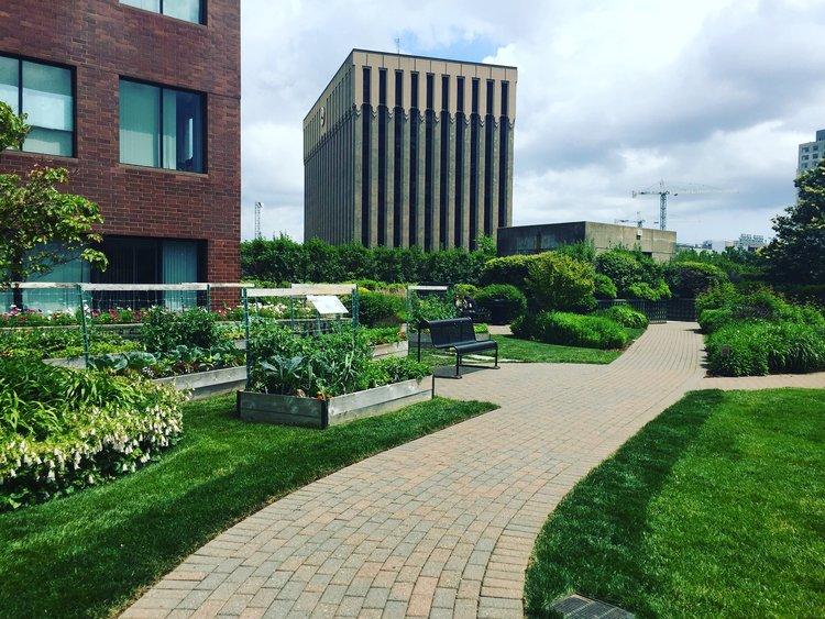 Kendall Center Roof Garden