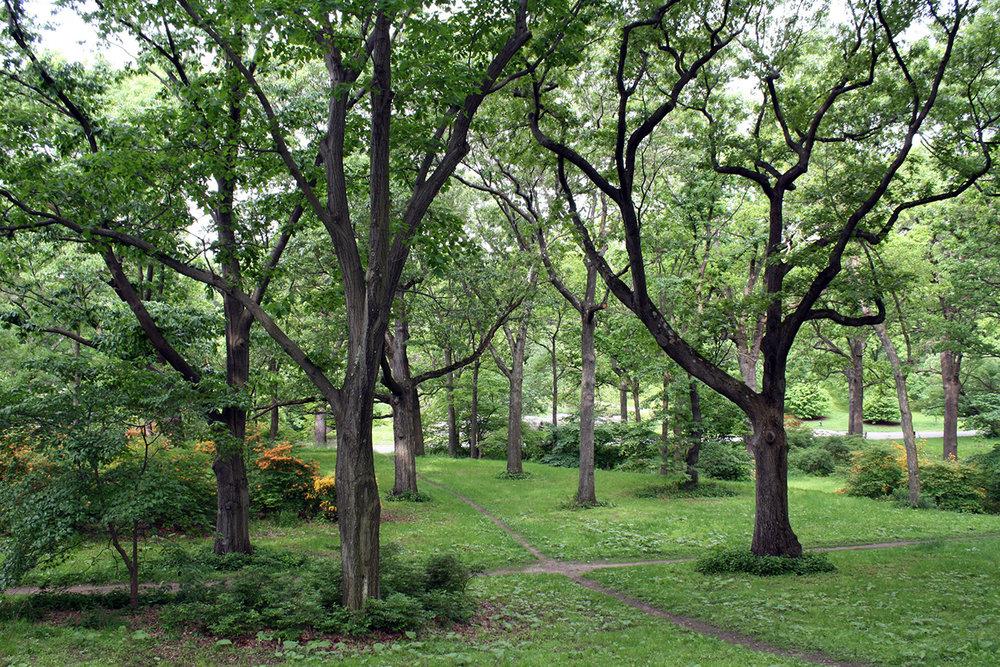 Landscape: Arnold Arboretum