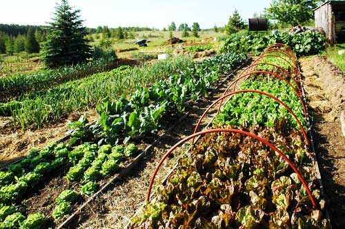 A CSA farm is a great idea for building local economies. More and more CSAs are popping up in urban areas.