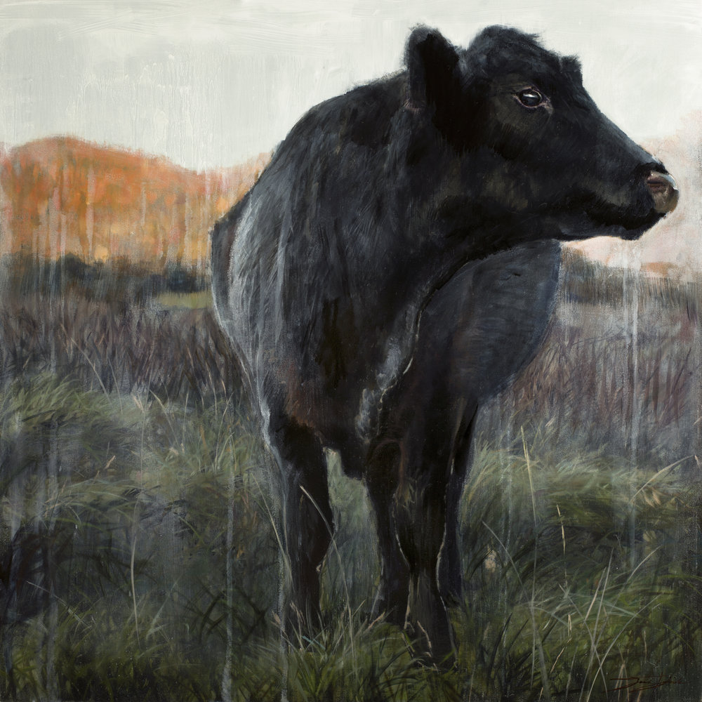 """Autumn Angus""  24""x24"" oil on panel"