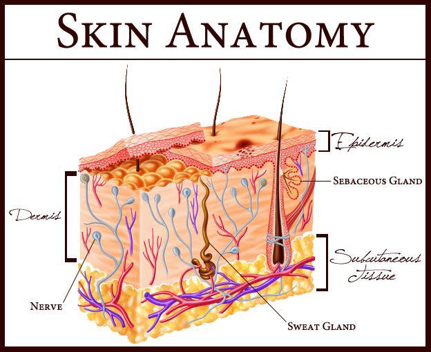 Skin Defined