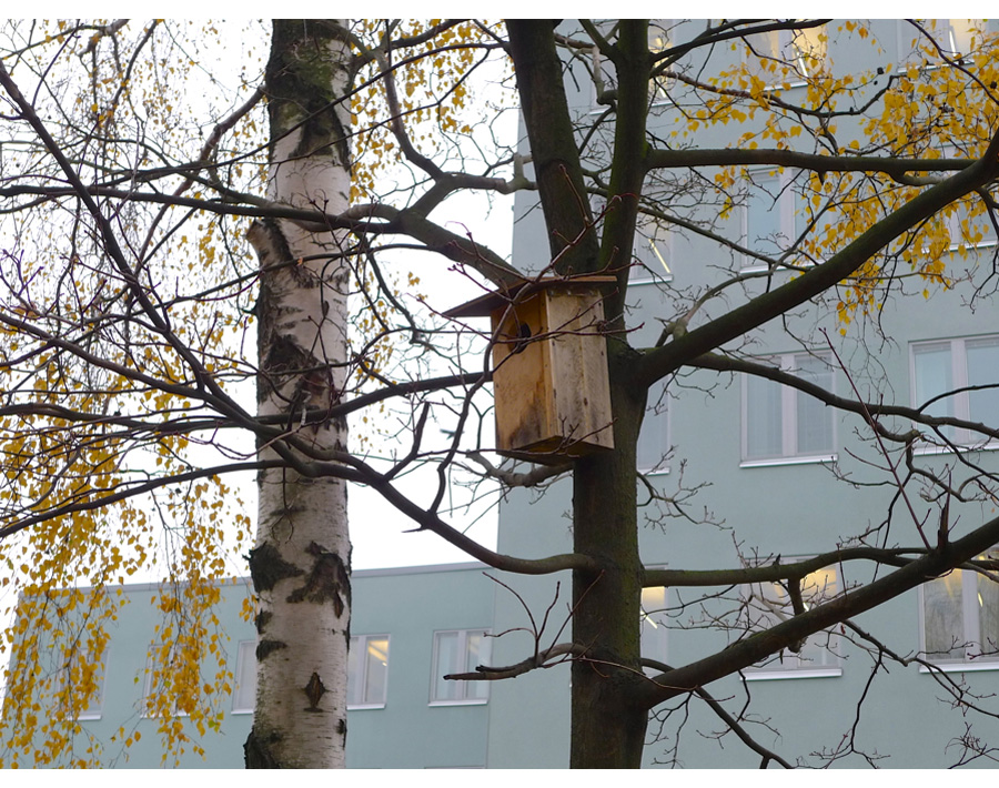 http://www.polarinertia.com/apr13/birdhouses01.htm