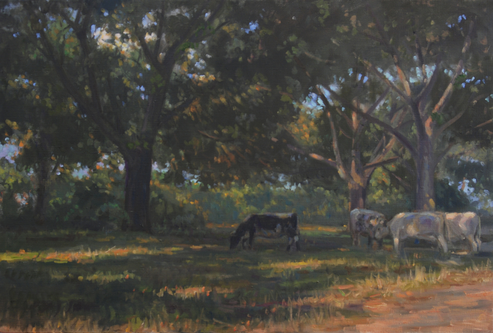 Cows under the Trees, Oil on linen, 20x30 inches.
