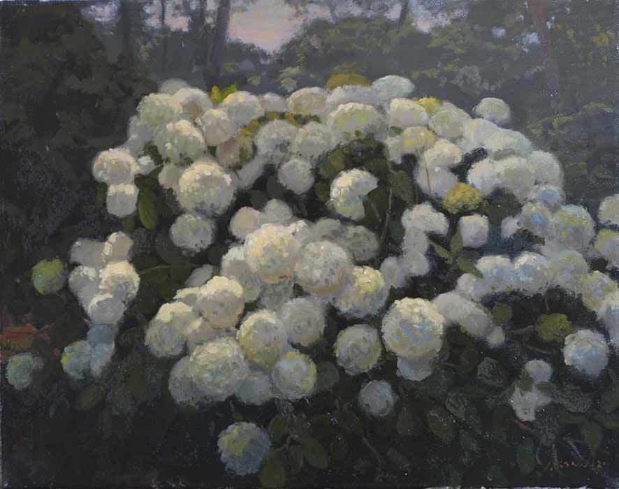 White Hydrangea, Oil on linen, 20x24 inches. [sold]