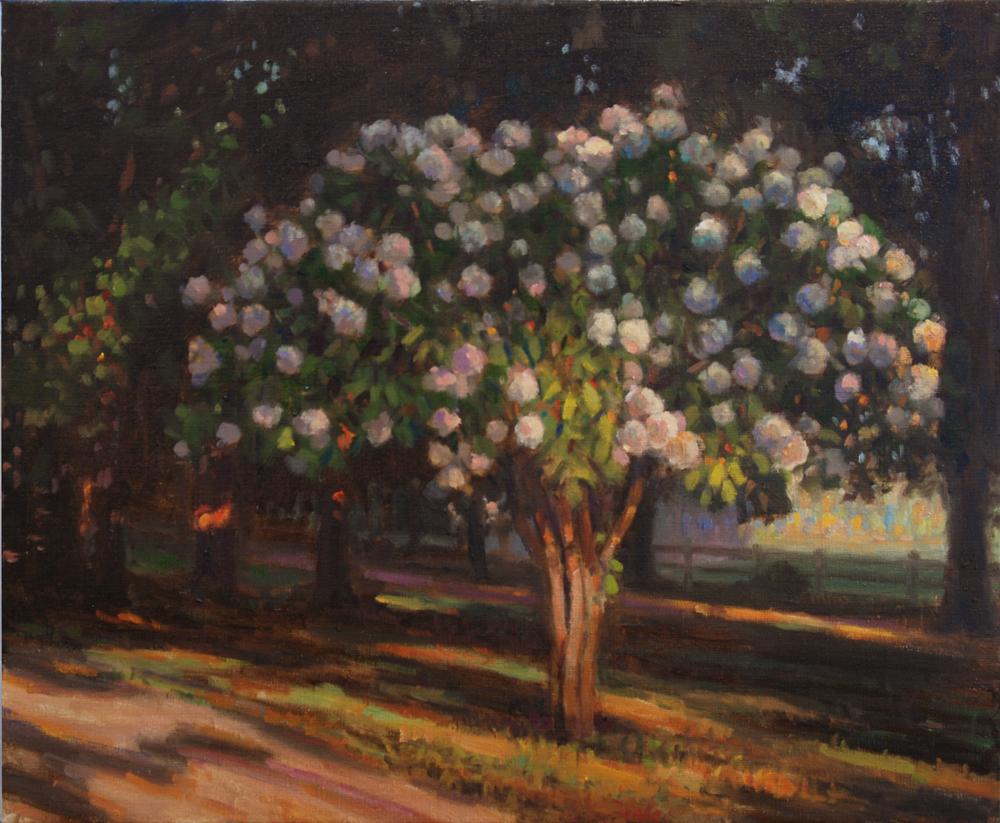 Hydrangea Tree, Oil on linen, 24x20 inches.