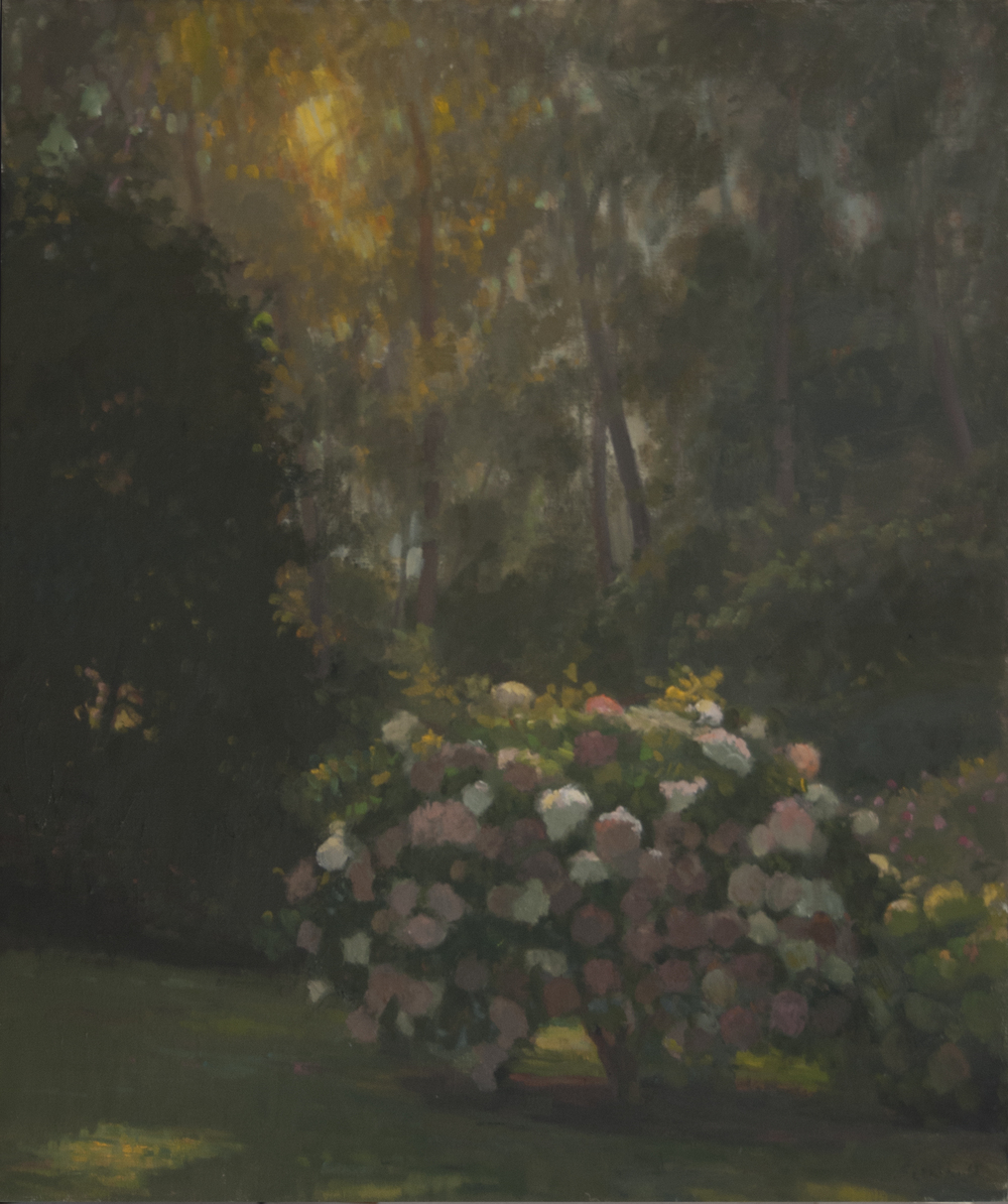 Hydrangea under low Light, Oil on linen, 24x20 inches.