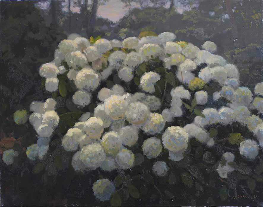 White Hydrangea , Oil on linen , 24 x 20 inches.