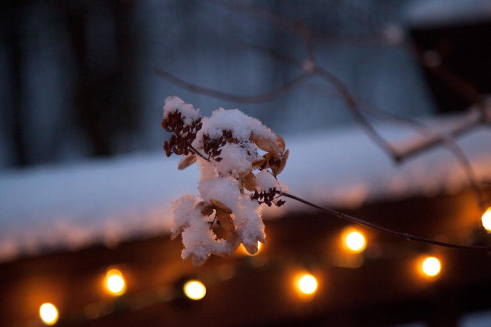 1500px240DPI_SnowyTree.jpg
