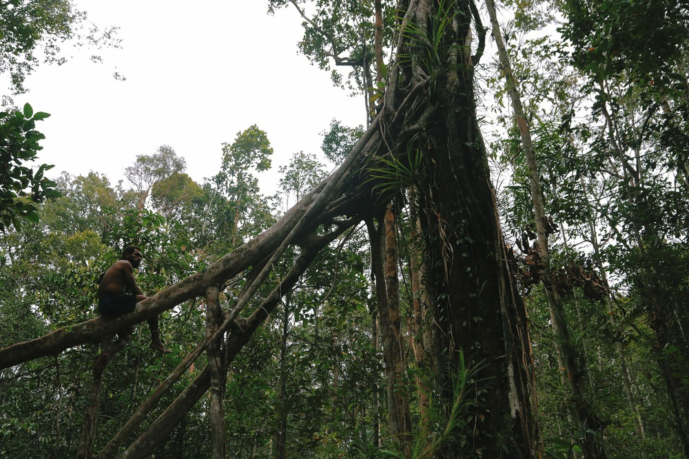 People of the Trees   Read the Journey to the Korowai   PartOne  Part Two