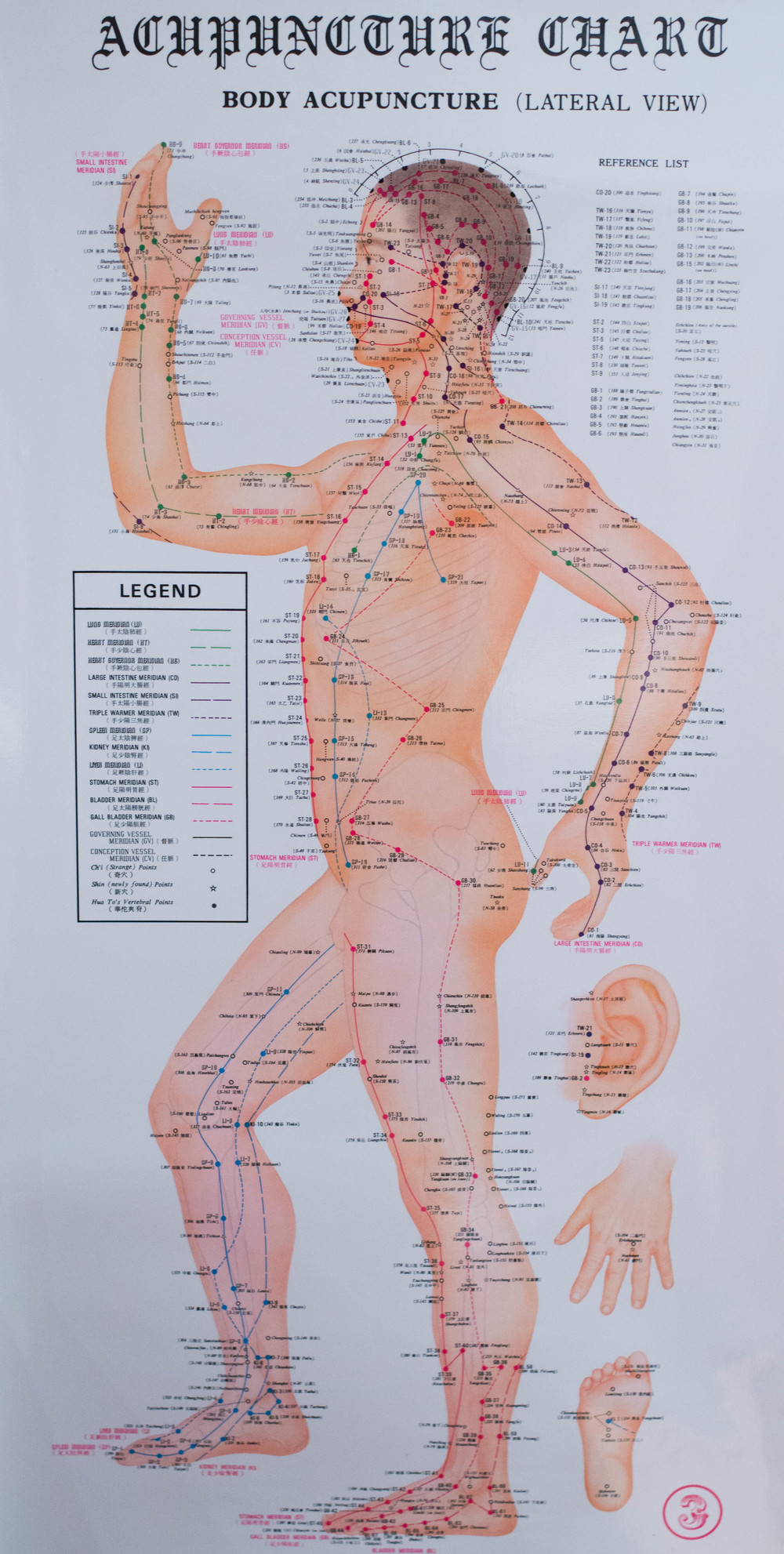The Meridian Map of the Oriental Medical System