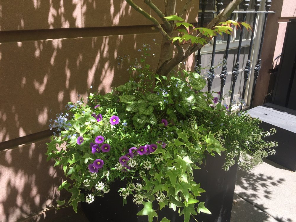 Carroll Gardens Entrance Planting